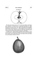 Էջ 317