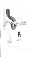 Էջ 486