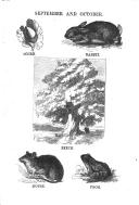Էջ 335